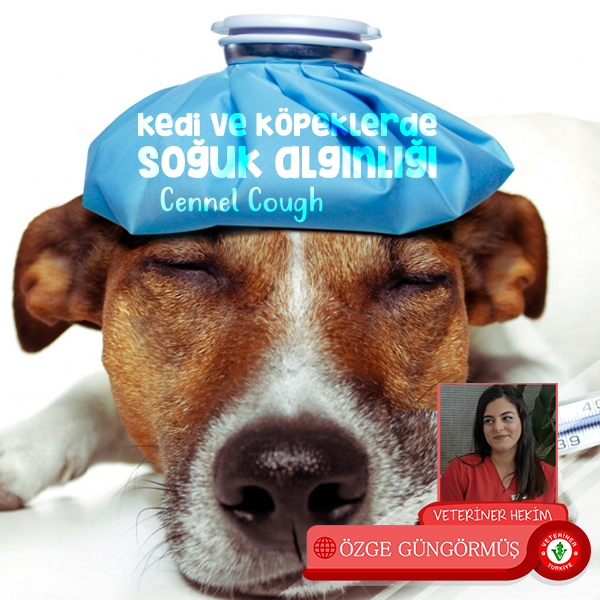 kedi-ve-ko%cc%88peklerde-sog%cc%86uk-alginlig%cc%86i-kennel-cough